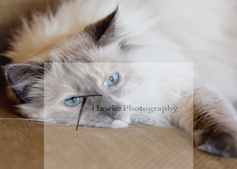 Wisconsin Rapids Pet Photographer